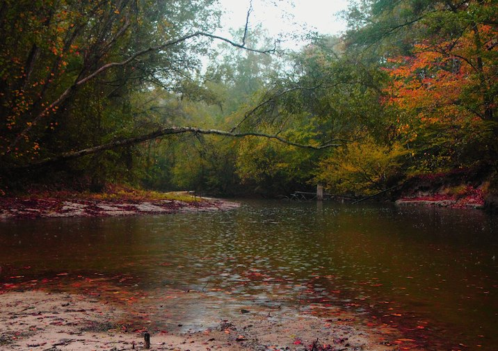 Kisatchie National Forest bayou in the rain.