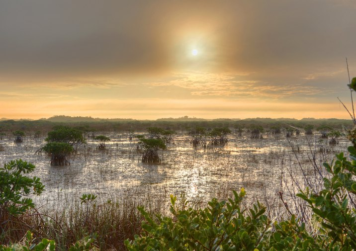 Mangroves in Everglades National Park.