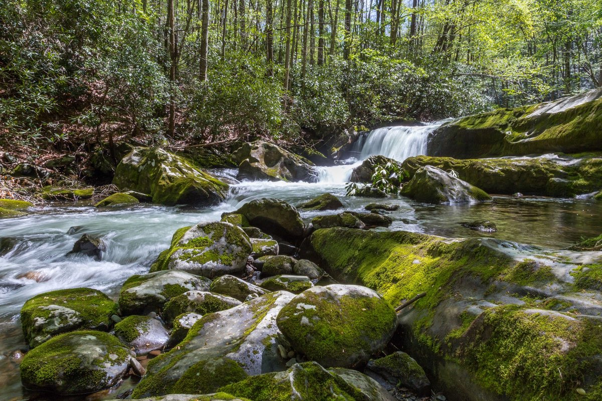 Hiking along the Middle Prong Trail in Great Smoky Mountains National Park.