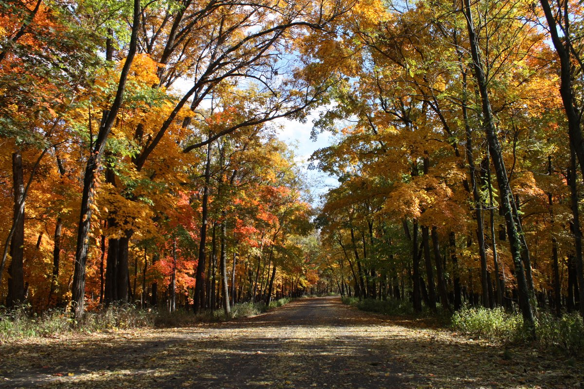 Fall Foliage in Mark Twain State Park in Missouri.