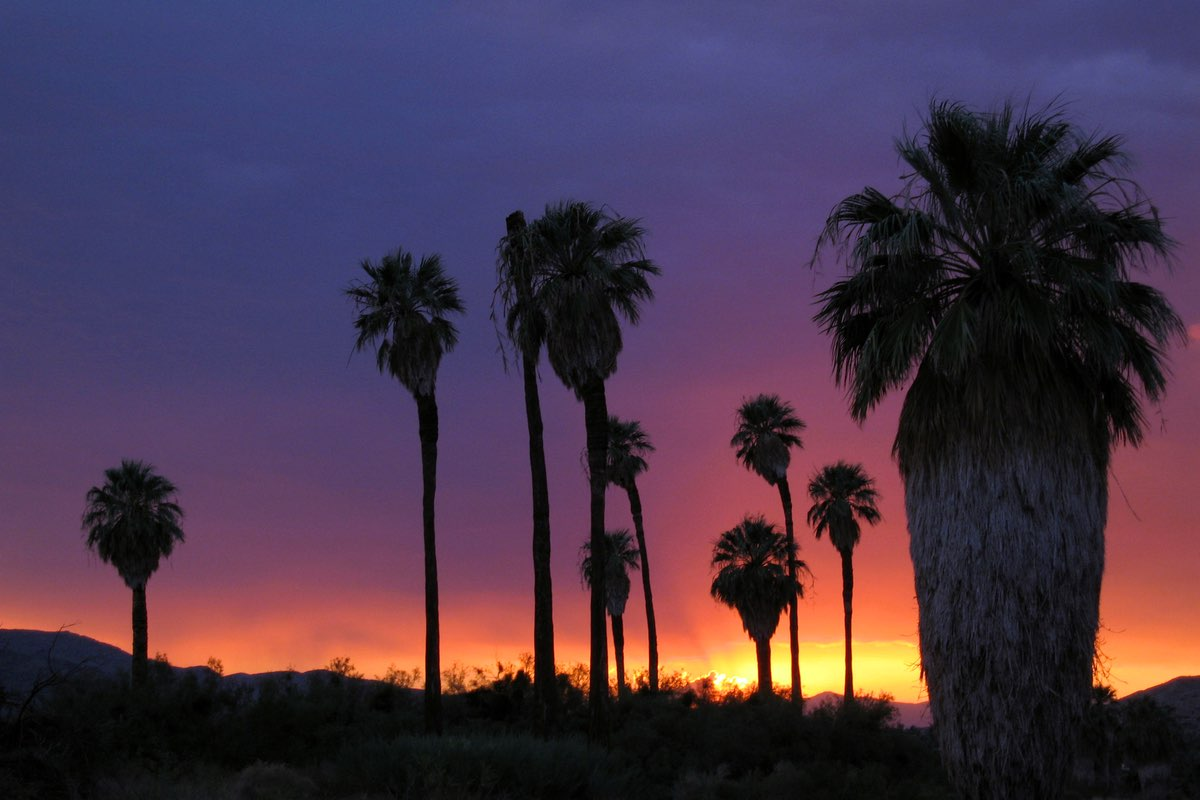 Sunset along the Oasis of Mara Trail in Joshua Tree National Park.