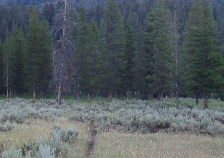 Pebble Creek Trail in Yellowstone National Park.