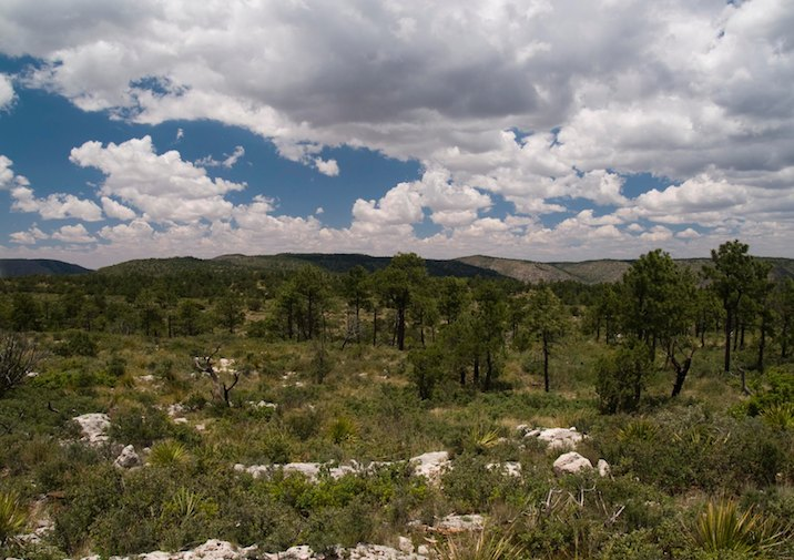 Along the Permian Reef Trail in Guadalupe Mountains National Park, Texas.