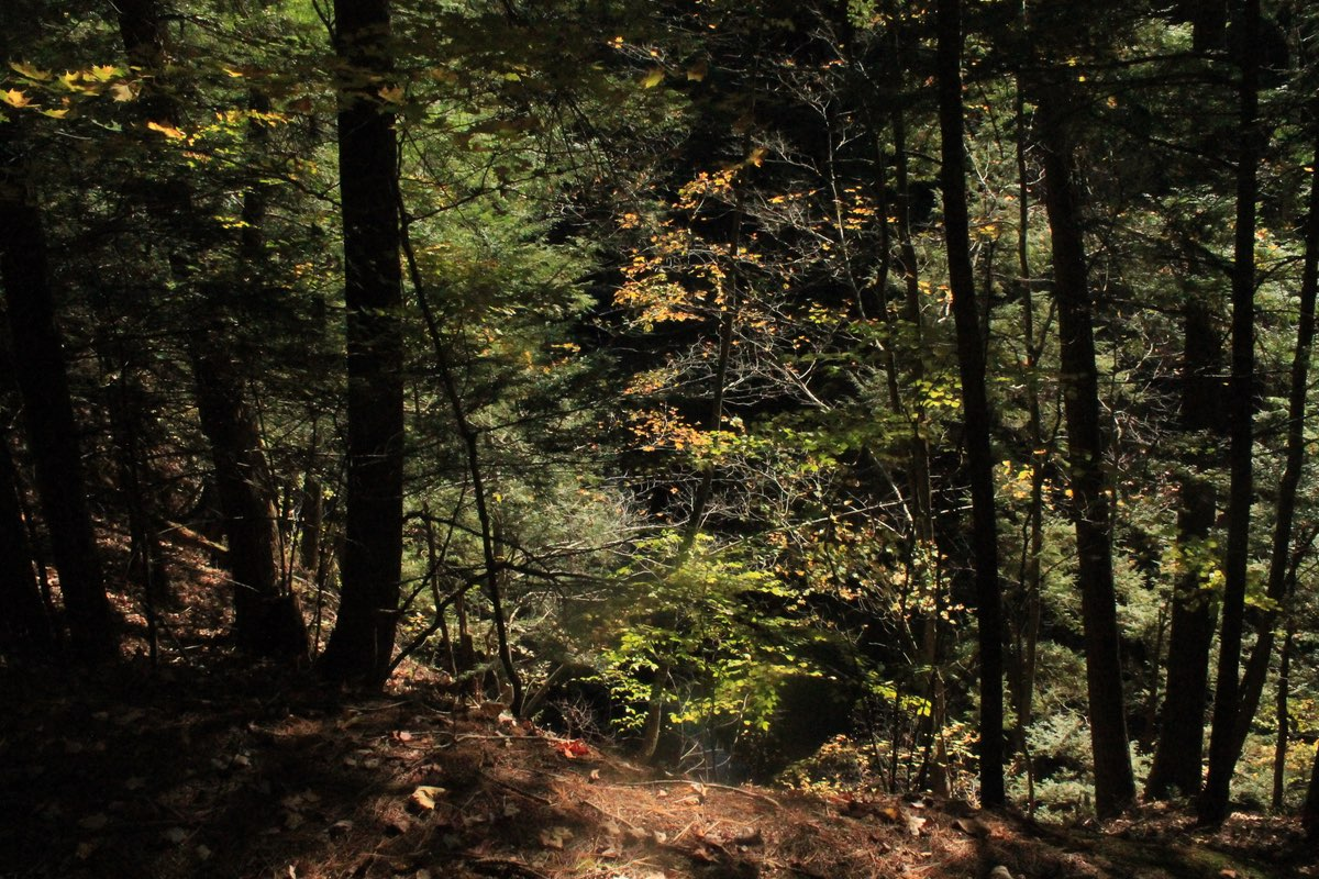 Hiking in Fillmore Glen State Park.
