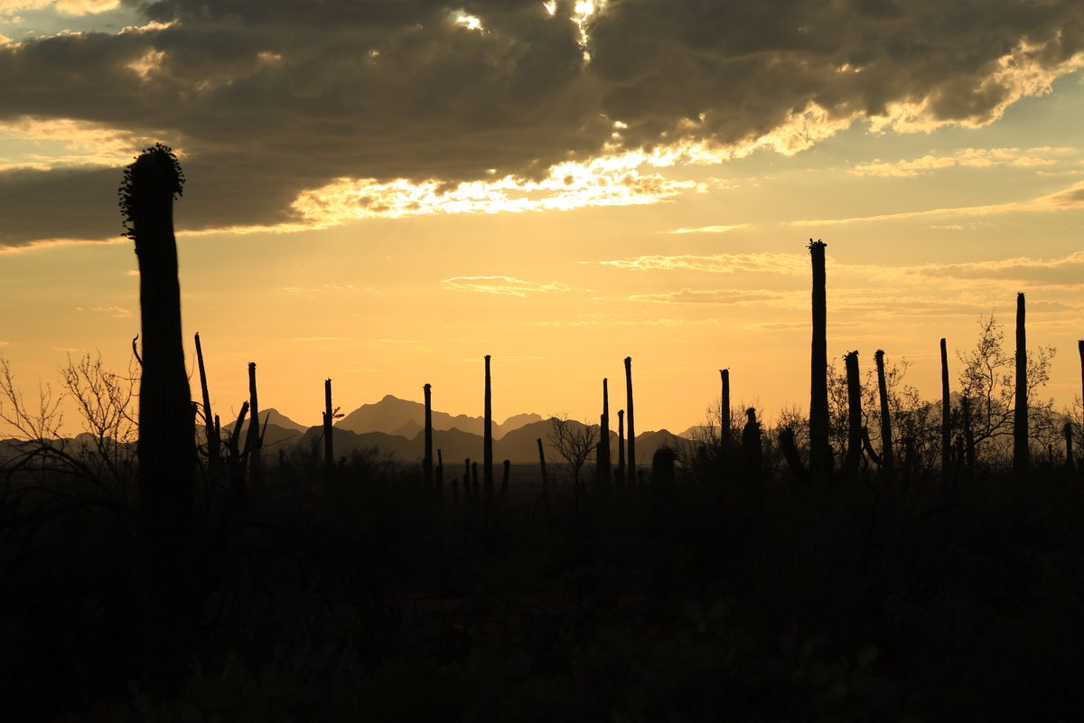 Sunset in Saguaro National Park.