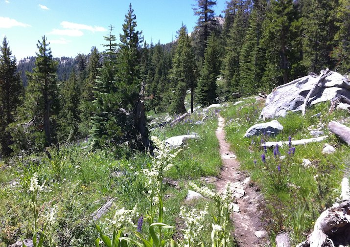 Trail leading to Ten Lakes in Yosemite National Park.