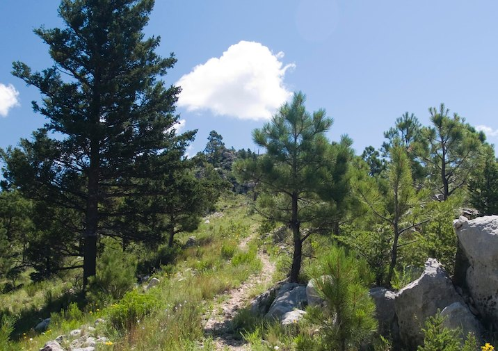 The Bowl Trail in Guadalupe Mountains National Park, Texas.
