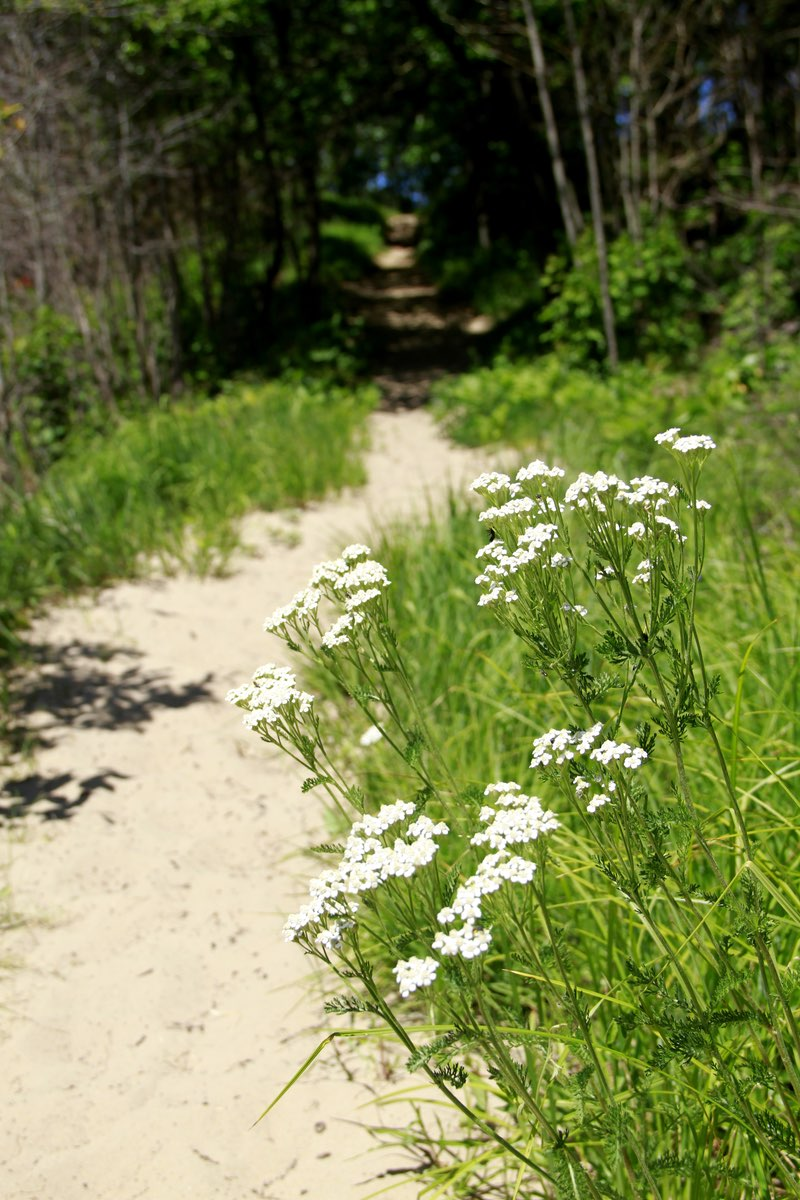 Hiking along the Tolleston Dunes Trail in Indiana Dunes National Lakeshore.