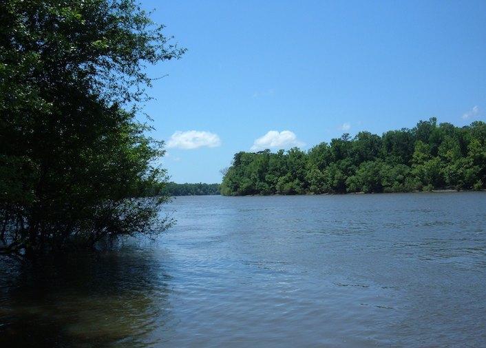 Apalachicola River in Torreya State Park Florida.