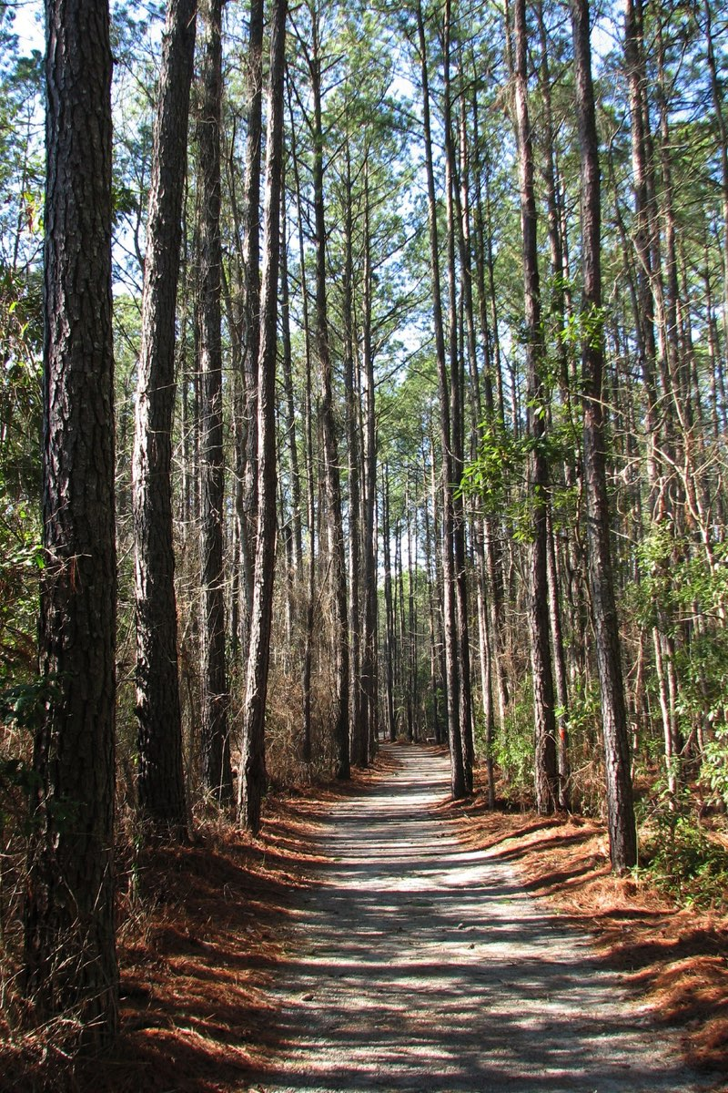 Trail in Goose Creek State Park near Wilmington North Carolina.