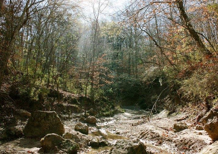Tunica Hills Trail in Louisiana.