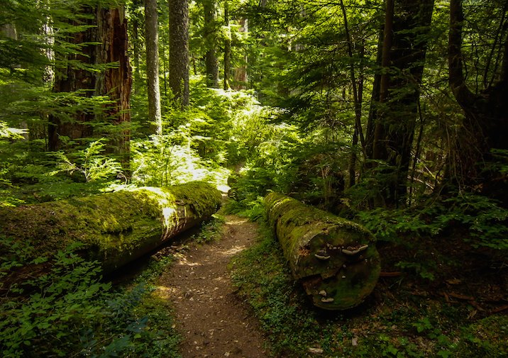 Twin Firs Trail in Mount Rainier National Park.