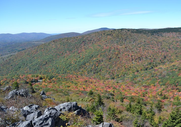 Sweeping view of fall foliage along the Twin Pinnacles Trail in Grayson Highlands State Park.