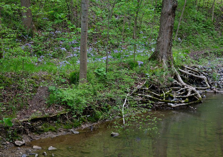 Wildflowers and a stream in Canoe Creek State Park in Pennsylvania.