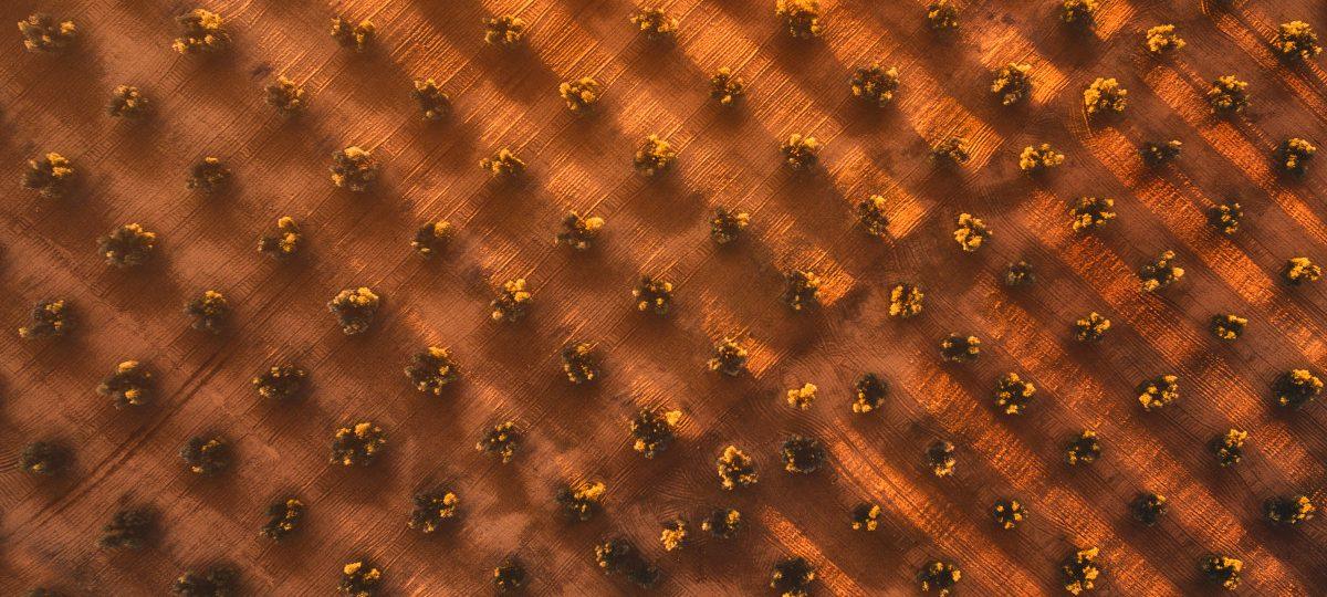 Segundo lugar en Paisaje Amateur: Geometry of Liquid Gold, de Javier del Cerro