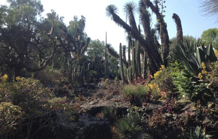 Jardín botánico de la UNAM