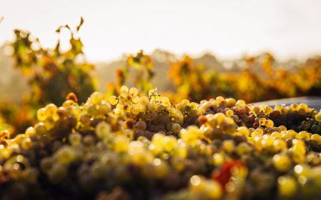 Ferias de vino