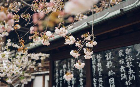 Hanami en Japón | Revista Travesías