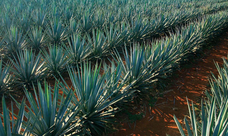 Ruta del Tequila, Jalisco