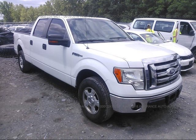 Inventory #818778432 2010 FORD F150