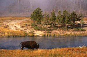 Bison | Photo: MOTBD Donnie Sexton