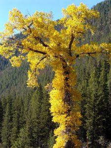 Fall Foliage | Photo credit: LES LOBLE