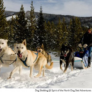 Dog Sledding at Big Sky