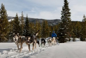 Dog Sledding | MOTBD
