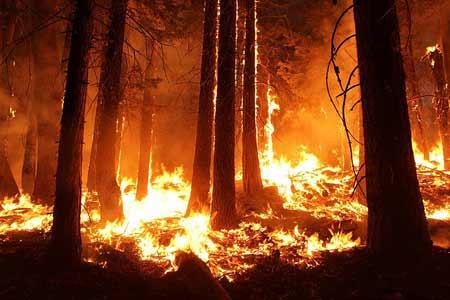 Wildfire | Pixabay Image