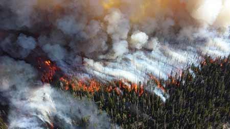 Forest Fire Burning | Pixabay Image