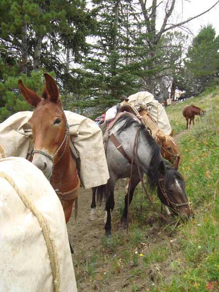 Hunting Trip | Photo: Jake's Horses