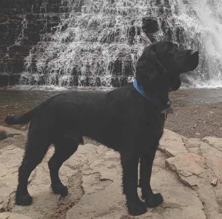 Dog At Ousel Falls | Photo: Les Lobel