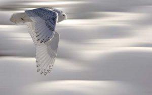 Owl | shutterstock