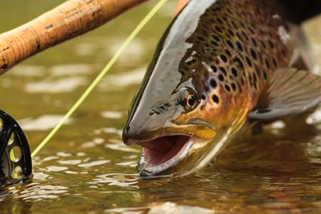 trout and fishing pole | Shutterstock