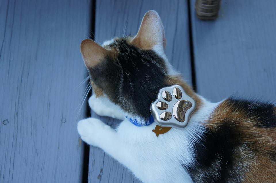 cat wearing gps pet tracker