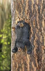Bear Upside Down Wall Decor And Hooks