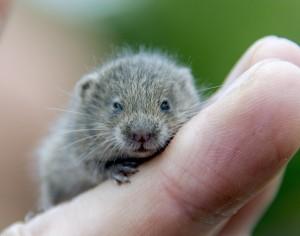 Hamster Jetleg