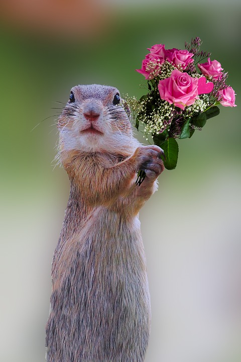 chipmunk holding bouquet of flowers to inspire volunteers