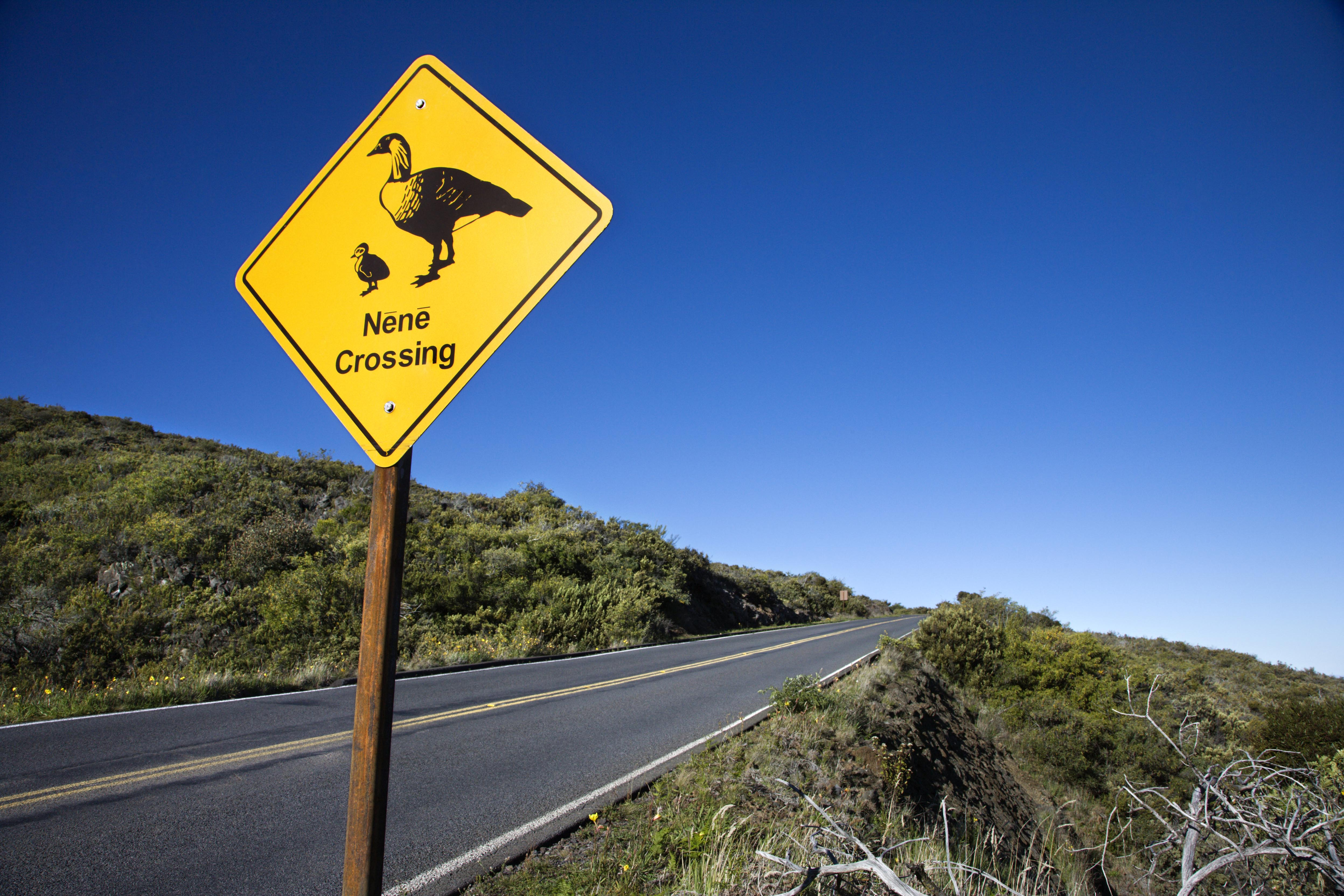 "Shot of ""Nene Crossing"" road sign in Haleakala National Park, Maui, Hawaii."