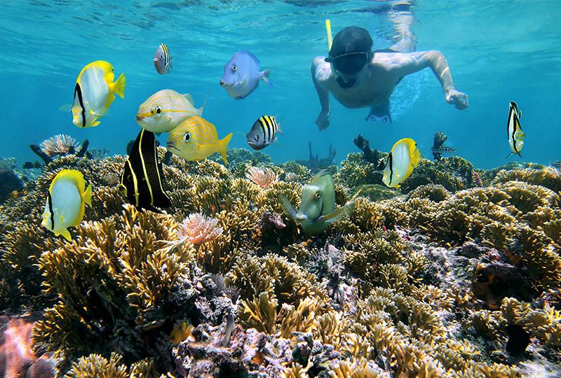 Go snorkeling on Maui
