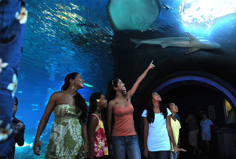 Visit Maui Ocean Center with your family