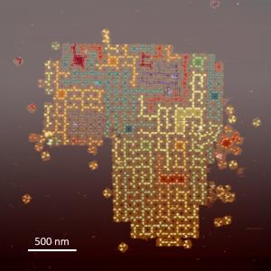 image of self-assembled random tree structures on the surface of DNA tile arrays