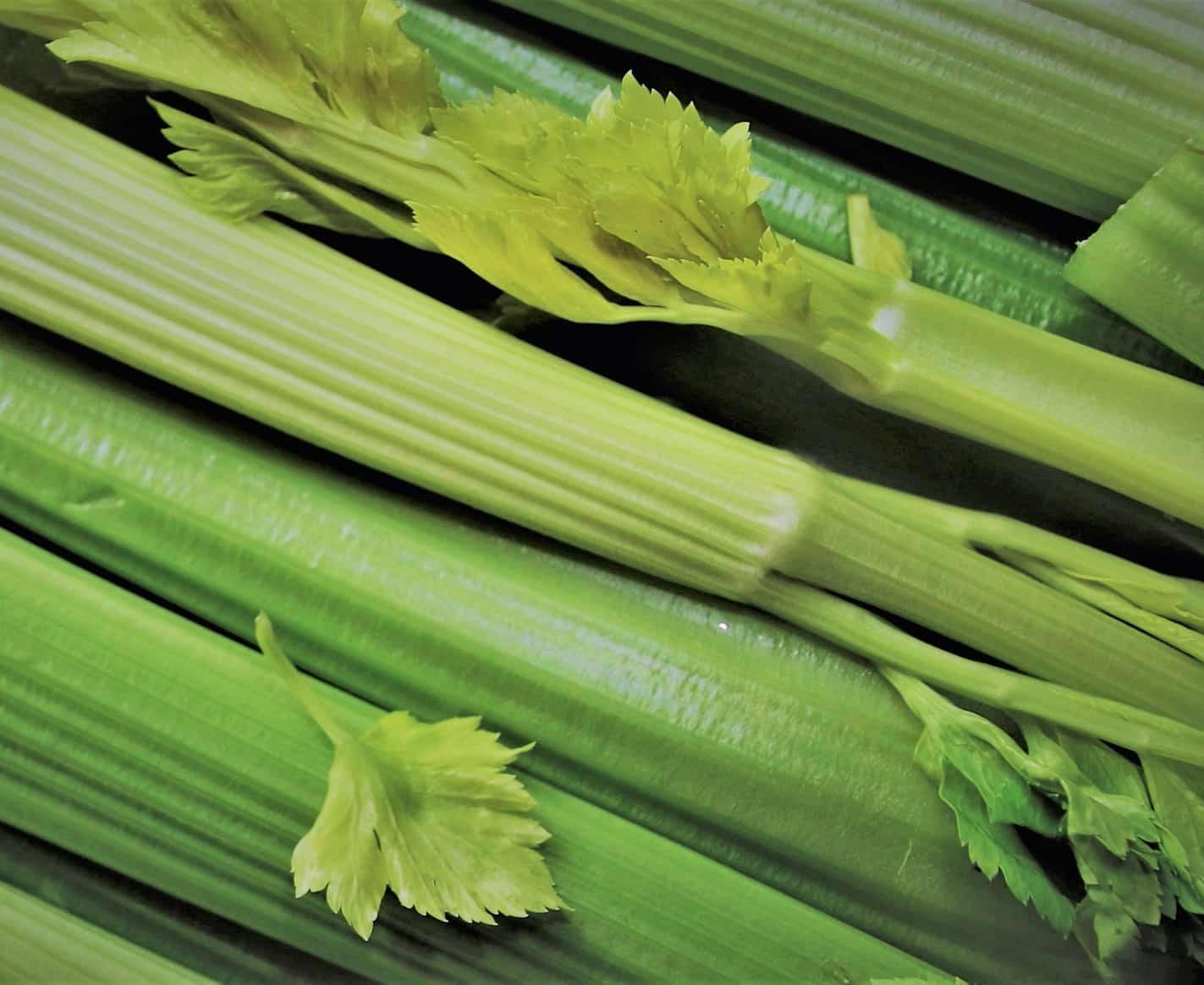 image of celery