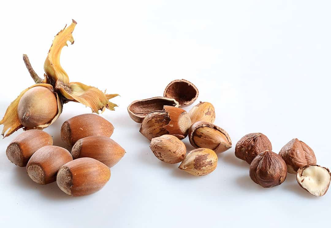 image of hazelnut