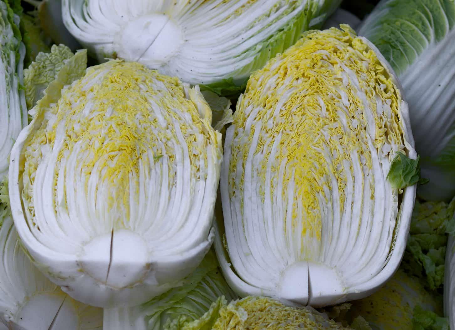 image of napa cabbage