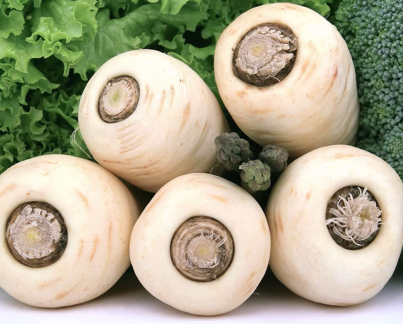 image of parsnip