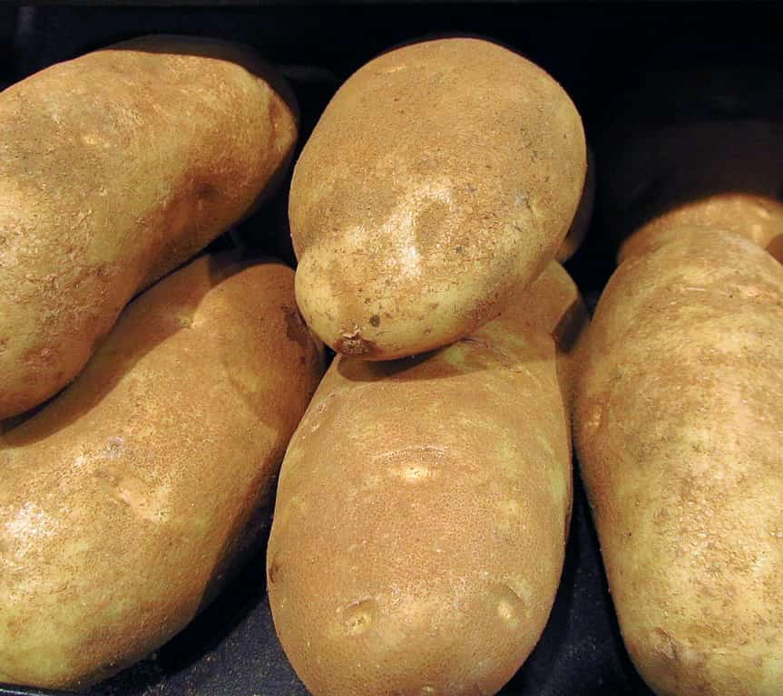 image of russet potato
