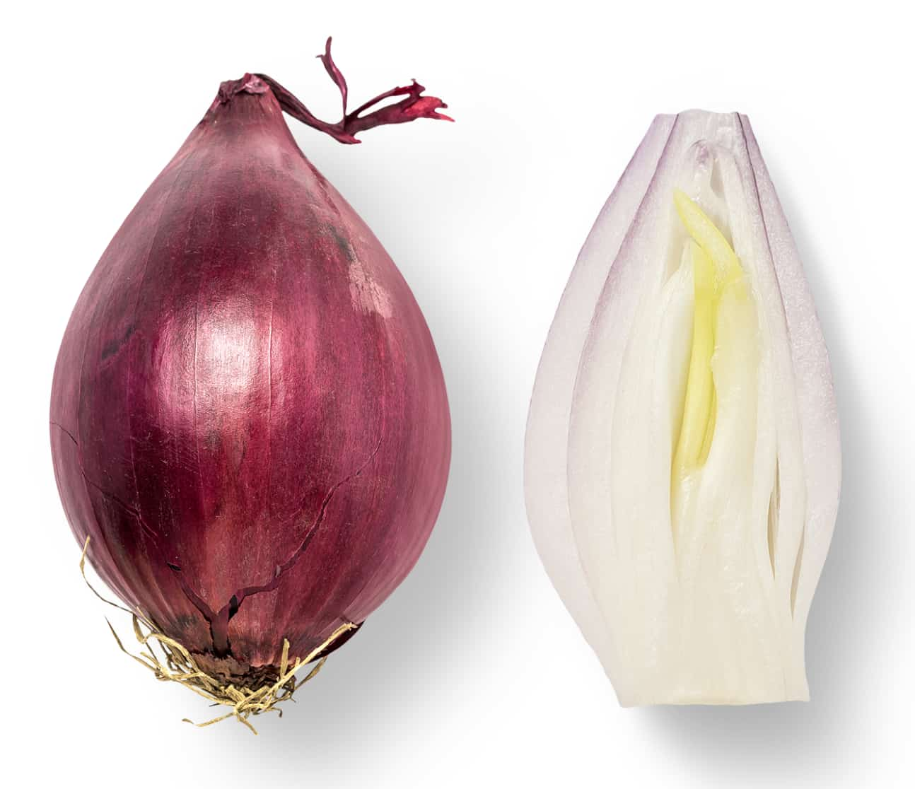 image of shallot