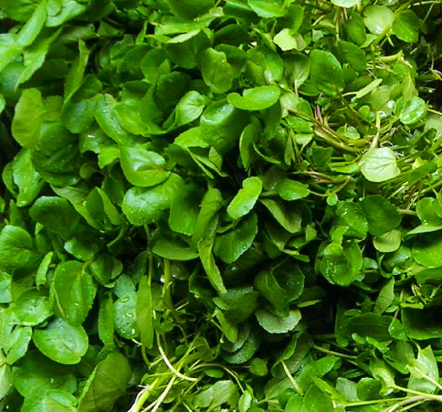 image of watercress