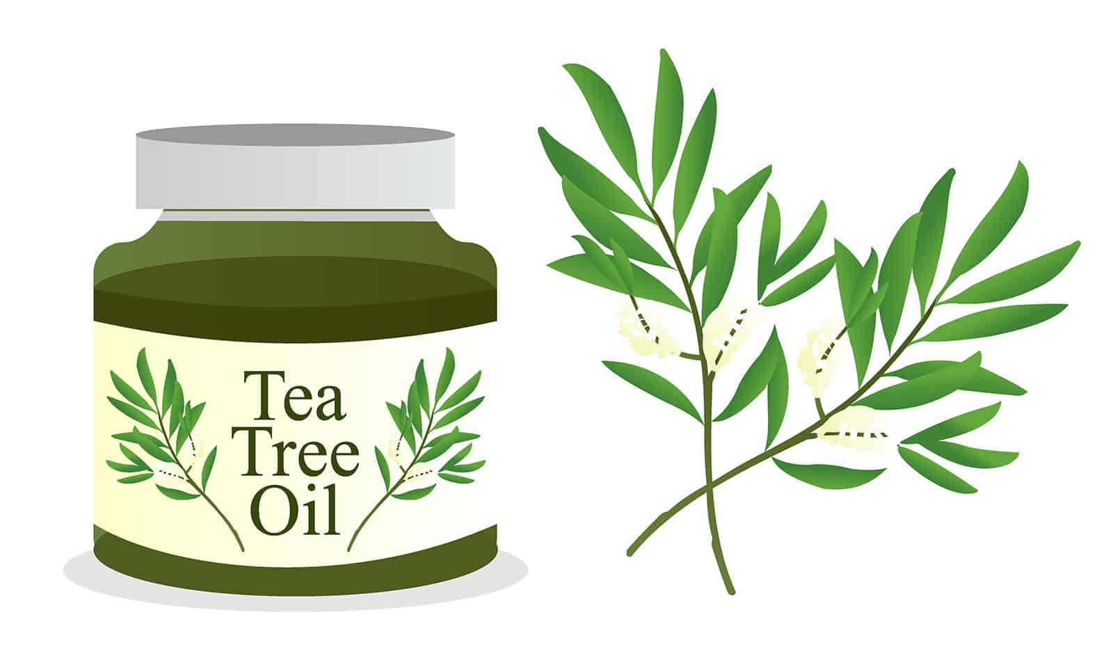 3 Ways to Use Tea Tree Oil in Your Home